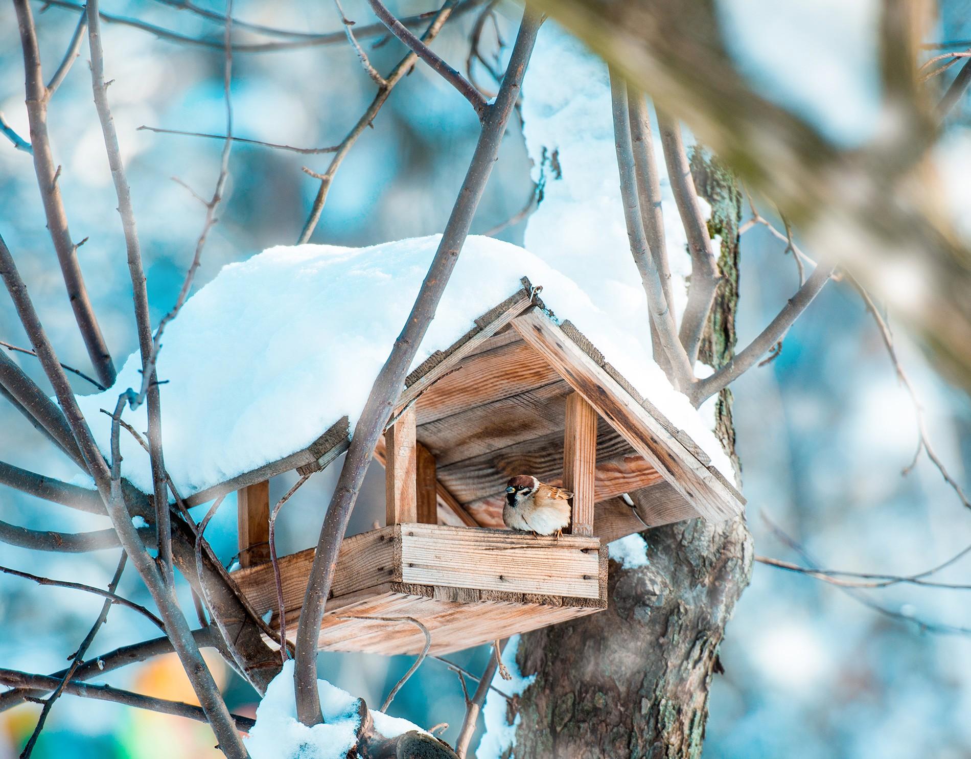 Alimentation oiseaux