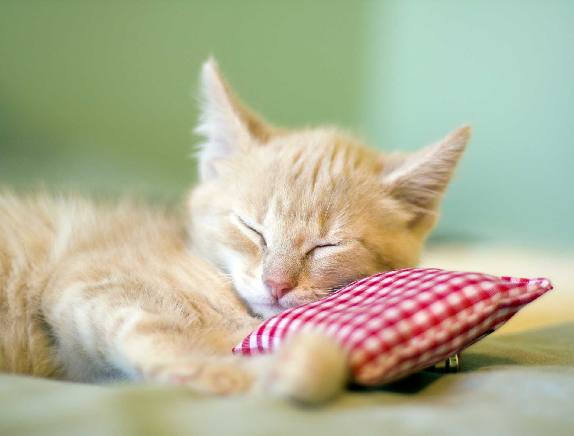 Accueillir un chaton chez soi